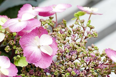 Lesnate rastline